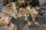 Kenya [Aug 2006]
