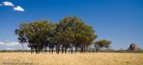 Dry paddock
