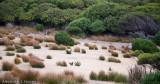Wallaby habitat