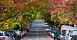 Autumn in Erskineville