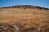 Altered landscape