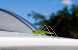 Green passenger