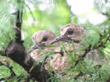 Nids - Nests