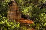 Bosbessen langs Rode spreng
