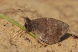 Kleine Heivlinder