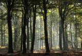 October forest, sunshine - Oktoberbos, zonlicht