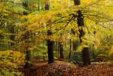 Autumn forest - Herfstbos