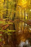 Molenbeek, autumn