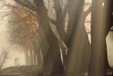 Fog and lightbeams - Mist en lichtstralen