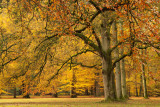 Autumn at a park forest