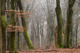Winter forest - Winterbos.