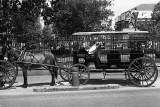 Horse & Carraige - New Orleans, LA