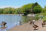 18-Toogood Pond.jpg