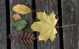 Autumn-leaves.jpg