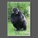 Return to the North Carolina Zoo