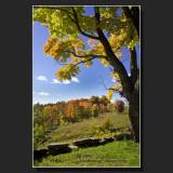 Autumn in New Hampshire 2008