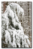 Winter in New Hampshire - 2008