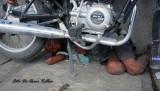 Es increible pero realidad, un ni�o apricionado por una motocicleta. A boy under a motorcycle