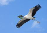 63602c - Wood Stork