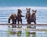 87968 - Dancing bears