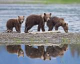 87945 - Cubs on the beach