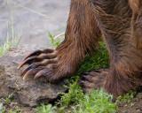 40-12342 - Bear Paws