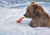 87162 - Grizzly with fish