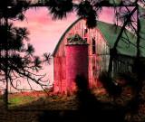 Old Barn Pines XX.jpg