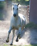 Hidden Spring Horses