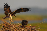 BlackWater Nat'l Wildlife Refuge