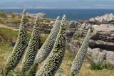 Flowers in Hermanus