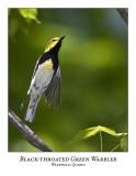 Black-throated Green Warbler-003