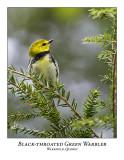 Black-throated Green Warbler-004
