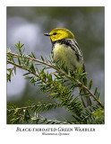 Black-throated Green Warbler-005