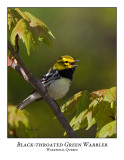 Black-throated Green Warbler-001