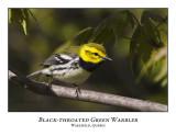 Black-throated Green Warbler-002