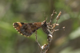 sumkinda moth
