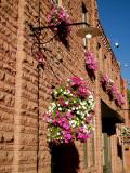 Aspen Wall Flowers