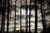 clouds through the birch forest.jpg