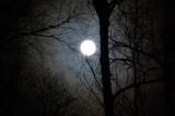 full moon through the birch trees.jpg