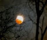 lunar eclipse hand held camera through the birch trees.jpg