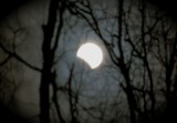 lunar eclipse through the birch trees_1.jpg