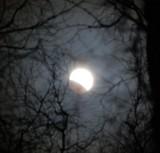 lunar eclipse through the birch trees_2.jpg