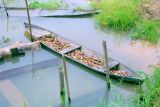 Boatload.jpg