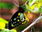 Butterfly Of Many Colors (Fractilus)