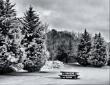 Winter's Picnic