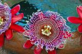 Passion Flower Ballet