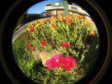 A bees eye view