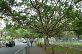 Walking back to Hyde park P1000440.JPG