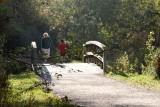 Autumn Walk II